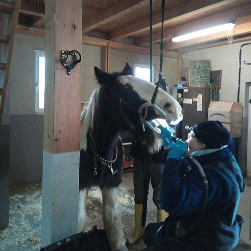 Zahnkontrolle beim Pferd
