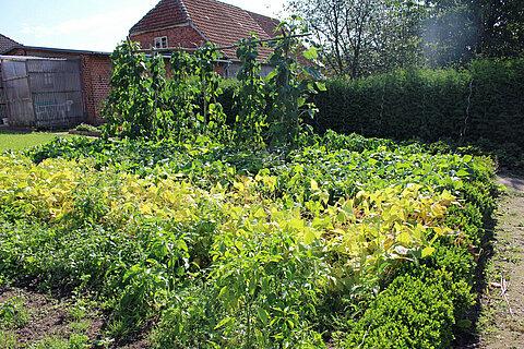 Unser Obst- und Gemüsegarten. Foto: © SaBo