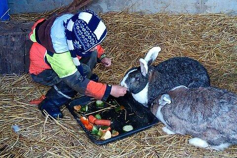 Besucherkind beim füttern der Kaninchen