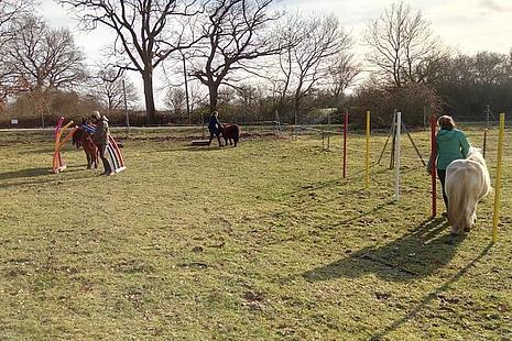 Kinder mit den Ponys auf unserem selbst gebauten Pferdeparcours.