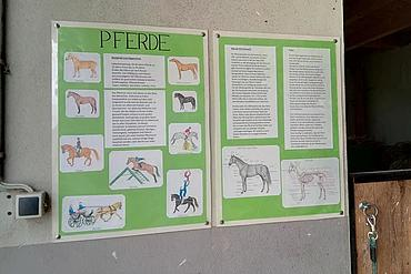 Tafeln mit Infomaterial über Pferde