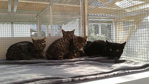 Katzenbabys in der Quarantäne.