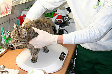 Tierärztliche Untersuchung