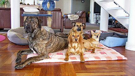 Rocky, Baloo, Fips und Senta.