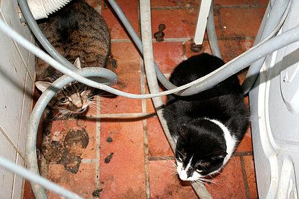 Katzen im Haus der Rentnerin. Foto: © aktion tier, Ursula Bauer