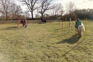 neuer Pferdeparcours auf dem Lottihof