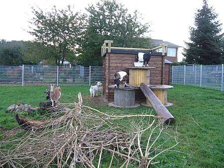 Kletter- und Unterstellmöglichkeit für Ziegen