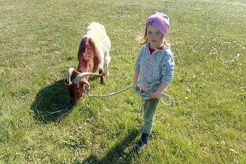 Die kleinen Besucher des aktion tier Lottihofs gehen gerne mit den Ziegen spazieren.