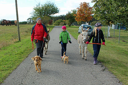 Spaziergang mit den Tieren.